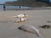 Tin tức trong ngày - Ngư dân đưa thuyền lên bờ vì cá biển chết hàng loạt