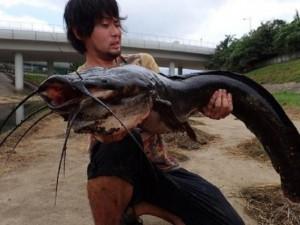 Thế giới - Hồng Kông: Bắt được cá trê khổng lồ trên sông đen ngòm