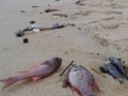 Tin tức trong ngày - Làm rõ nghi vấn ống xả thải khổng lồ dưới biển Vũng Áng