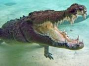 Phi thường - kỳ quặc - Nuôi cá sấu làm thú cưng suốt 60 năm