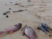 """Tin tức trong ngày - """"Hiện tượng cá chết hàng loạt có thể tiếp tục tái diễn"""""""