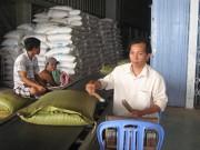 Thị trường - Tiêu dùng - Muốn xuất khẩu gạo phải lập công ty tại… Singapore