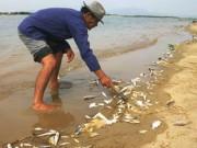 Tin tức trong ngày - Vụ cá chết bất thường: Thủ tướng chỉ đạo hỗ trợ ngư dân
