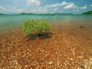 Du lịch - Đảo Bà Lụa, điểm đến hoang sơ của dân phượt