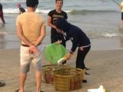 Tin tức trong ngày - Dân Quảng Bình đổ xô vớt cá biển bán cho thương lái