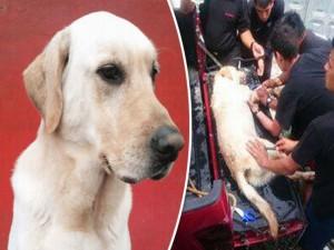 Phi thường - kỳ quặc - Chú chó cứu hộ chết vì kiệt sức sau khi cứu 7 người