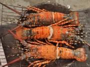 Ẩm thực - 15 món ăn hải sản ngon nổi tiếng không nên bỏ qua
