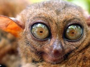 Thế giới - 99,99% loài trên Trái đất vẫn bí ẩn với con người