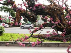 Tin tức trong ngày - Ngắm cây đào thế bằng đá quý giá bạc tỷ ở Hà Nội
