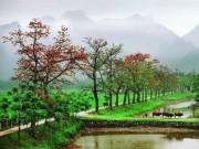 Du lịch - Thôn Đoan Nữ bình yên mùa hoa gạo đỏ