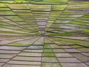 Du lịch - Vẻ đẹp độc đáo của cánh đồng hình lưới nhện ở Indonesia