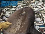Tin tức trong ngày - Cá mặt trăng quý hiếm lại mắc lưới ngư dân Nghệ An