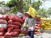 """Thị trường - Tiêu dùng - Thái Lan xả kho gạo khổng lồ, gạo Việt """"nín thở"""""""