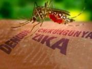Sức khỏe đời sống - Một phụ nữ Hàn Quốc nhiễm virus Zika sau khi trở về từ TP.HCM