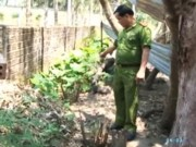 """Video An ninh - Cho người yêu """"mượn đất"""" trồng cần sa sau vườn nhà"""