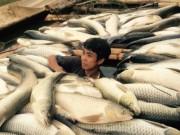Video An ninh - Lãnh đạo Thanh Hóa lên tiếng vụ cá chết trên sông Bưởi