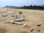 Tin tức trong ngày - Thái Bình: Điều tra người tung tin hải sản chết trắng