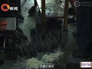 Phi thường - kỳ quặc - Người đàn ông sống cùng 40 con chuột ở TQ
