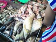 """Thị trường - Tiêu dùng - Tấp nập khách """"săn"""" cá ươn giá rẻ tại chợ thực phẩm HN"""
