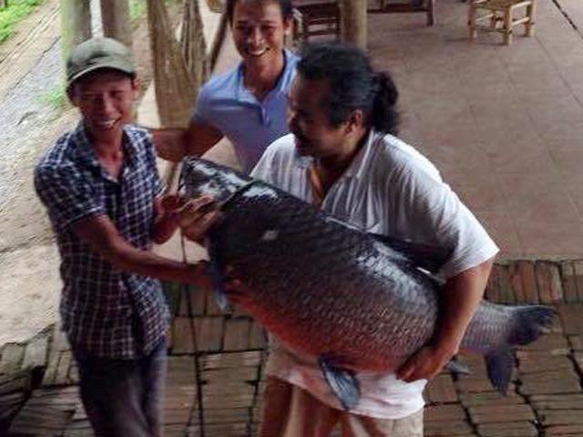 """Câu được cá """"khủng"""" dài 1m giữa trung tâm Sài Gòn - 5"""