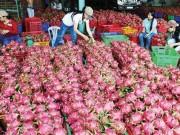 Thị trường - Tiêu dùng - Úc xem xét nhập khẩu thanh long Việt Nam