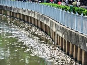 Tin tức trong ngày - TPHCM công bố nguyên nhân cá chết trắng kênh  Nhiêu Lộc