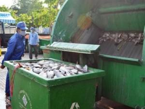 Tin tức trong ngày - 70 tấn cá chết trắng trên kênh Nhiêu Lộc – Thị Nghè