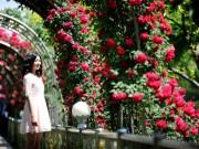 Bạn trẻ - Cuộc sống - Nếu bạn đến Hàn dịp này, đừng bỏ lỡ lễ hội hoa hồng!