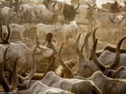 Điểm du lịch - Cuộc sống của bộ tộc dùng nước tiểu của bò để tắm