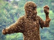 Du lịch - Thanh niên Mỹ bị nghìn con ong rừng đốt chết