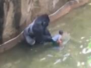 Phi thường - kỳ quặc - Mỹ: Khỉ đột 2 tạ kéo tuột bé 3 tuổi vào chuồng