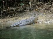 Thế giới - Tắm biển ở Australia, nữ du khách bị cá sấu ăn thịt