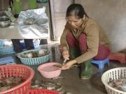 Thị trường - Tiêu dùng - Bơm tạp chất cho tôm xuất ngoại: Bán rẻ khách vẫn bỏ chạy