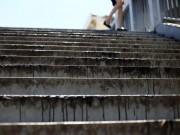 Tin tức trong ngày - Hà Nội: Cầu đi bộ chảy nhựa vì nắng nóng