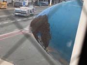 Tin tức trong ngày - Hàng ngàn con ong bu kín đầu máy bay Vietnam Airlines sau cơn mưa