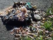 Tin tức trong ngày - Kinh hãi hàng ngàn kim tiêm đã sử dụng rơi vãi trên đường