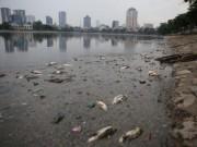 Tin tức trong ngày - Chủ tịch Chung yêu cầu cứu cá hồ Hoàng Cầu ngay trong đêm