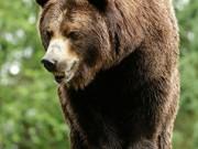 Phi thường - kỳ quặc - Mỹ: Tập yoga chỗ vắng, bị gấu áp sát liếm cổ