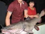 Tin tức trong ngày - Bắt được cá lăng khủng nặng gần 50 kg