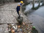 Tin tức trong ngày - Cá chết trắng hồ Hoàng Cầu do thời tiết?