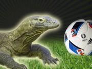 """Bóng đá - Euro 2016: Lộ diện """"nhà tiên tri"""" kế tục Bạch tuộc Paul"""