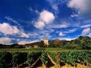 Thế giới - Tỉ phú Jack Ma mua 2 vườn nho Pháp hơn 300 tỉ