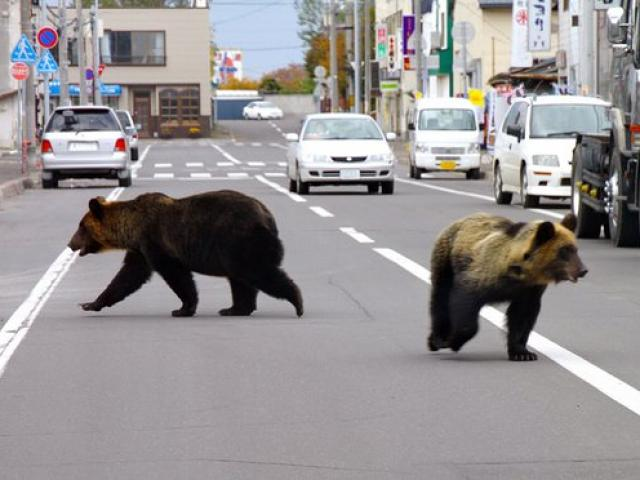 4 người Nhật bị gấu tấn công đến chết