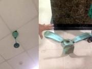 Tin tức trong ngày - Bị quạt trần chung cư rơi trúng đầu, 2 cư dân nhập viện