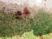 An ninh Xã hội - Khách bịt mặt đâm xe ôm nhiều nhát, cướp xe trong đêm