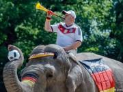 Thế giới - Euro 2016: Cơ hội kiếm bộn tiền của người Đức