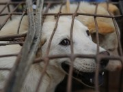 """Thế giới - TQ: 10.000 chó mèo bị """"hành quyết"""" đồng loạt trong lễ hội"""
