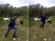 Thế giới - Video: Cảnh sát hoảng hồn bỏ chạy khi thấy rắn