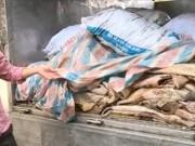 """Video An ninh - Rùng mình 1,6 tấn trâu bò hôi thối """"chạy"""" về Hà Nội"""