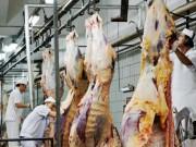 Thị trường - Tiêu dùng - Lo Úc cấm xuất khẩu bò sang Việt Nam